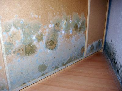 Verdeckter Schimmelpilzbefall hinter einem Schlafzimmerschrank in Wunstorf